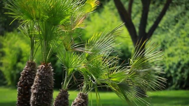 green palm löv i vinden - städsegrön växt bildbanksvideor och videomaterial från bakom kulisserna