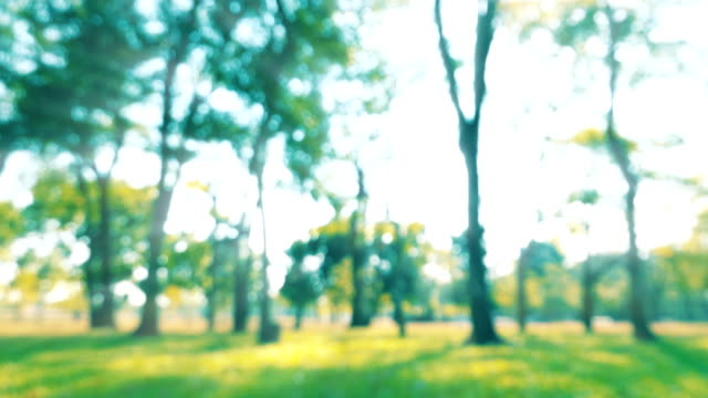 vídeos de stock, filmes e b-roll de parque verde, defocused - bétula