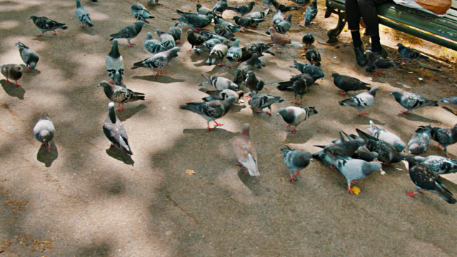 Green Park. Pigeons. Tree. Nature. Holiday