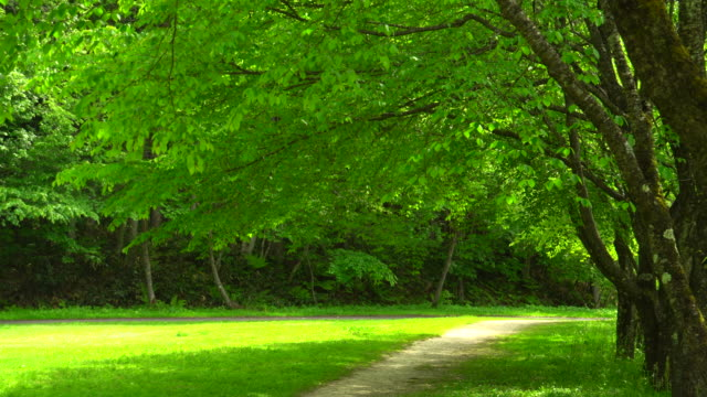Green park Green park natural parkland stock videos & royalty-free footage
