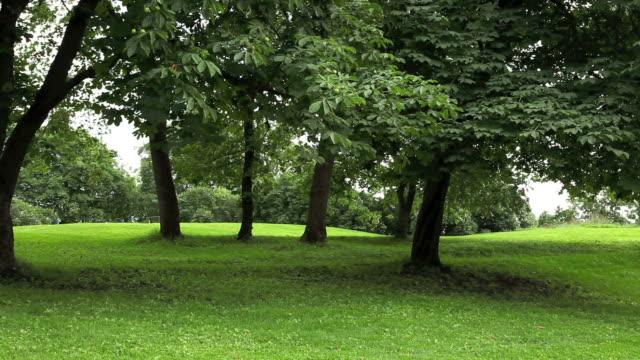 green park mit großen alten decideous bäumen und schattige bereiche. - blickwinkel der aufnahme stock-videos und b-roll-filmmaterial