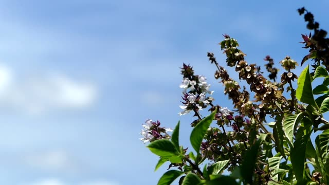 Green plant and blue sky video