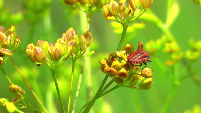 Green plant and the flying insects