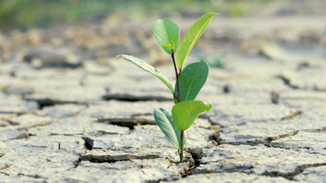 grüne pflanze wächst im trockenen, konzeptwald und naturschutz - wassersparen stock-videos und b-roll-filmmaterial