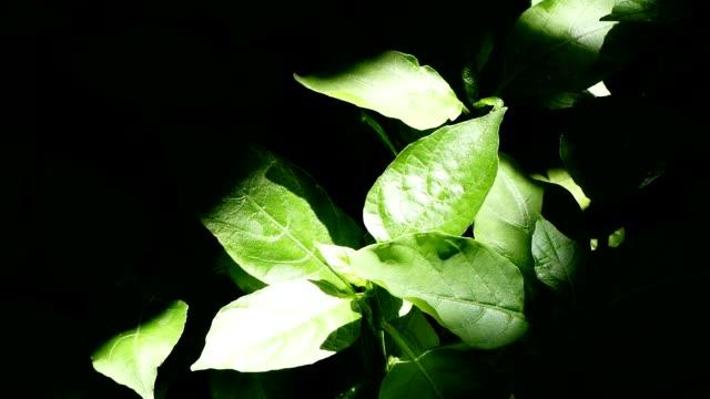 Planta verde en la jarra - vídeo