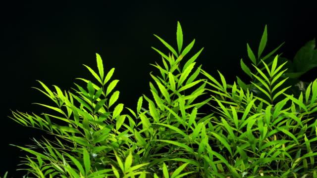 Green Plant on Black Background