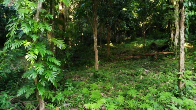 Green plants in jungle. Various tropical green plants growing in woods on sunny day in nature. Magical scenery of rainforest. Wild vegetation, monsteras and lianas deep in tropical forest drone view
