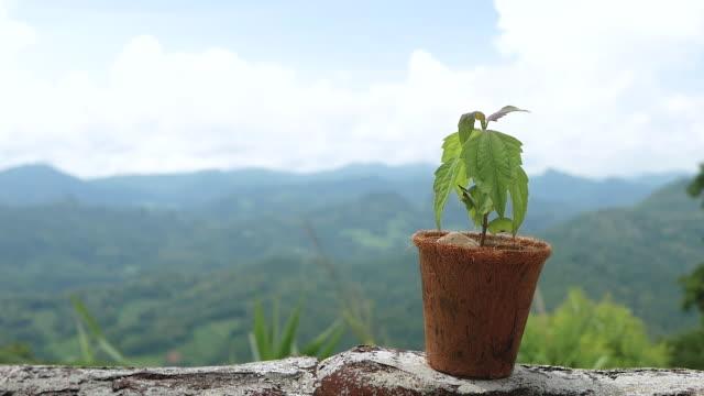 gröna växter i återvinna fiber potten på berg bakgrund. naturvård och ekologiskt biologiskt nedbrytbart material begrepp. - kokosfiber bildbanksvideor och videomaterial från bakom kulisserna