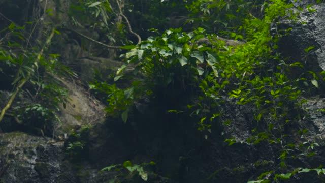 grüne pflanzen im tropischen regenwald. schöne pflanzen in der wilden natur auf dschungel wald und bach wasser fließt auf stein. tropische dschungellandschaft - baumgruppe stock-videos und b-roll-filmmaterial