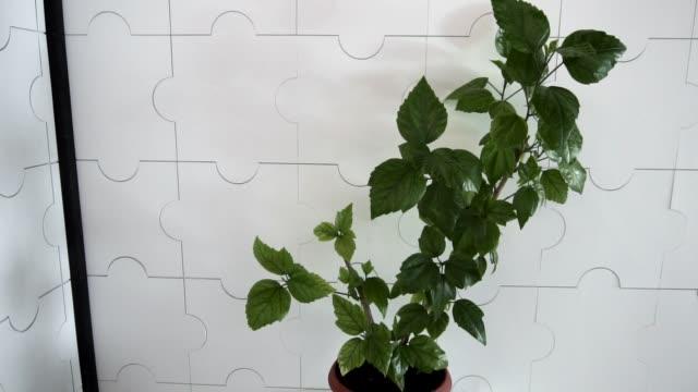 vidéos et rushes de la plante en pot verte se tient sur un piédestal blanc grand dans un bureau blanc. - pots de bureau