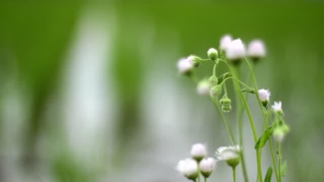 風のある緑の田んぼ - 雨点の映像素材/bロール