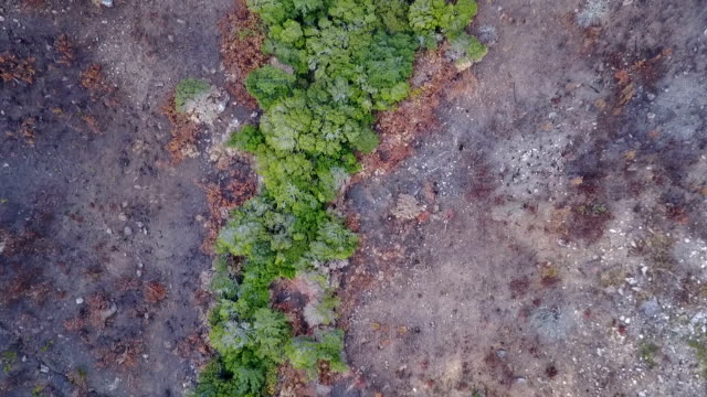green river busch umgeben von brandschäden - afrikanische steppe dürre stock-videos und b-roll-filmmaterial