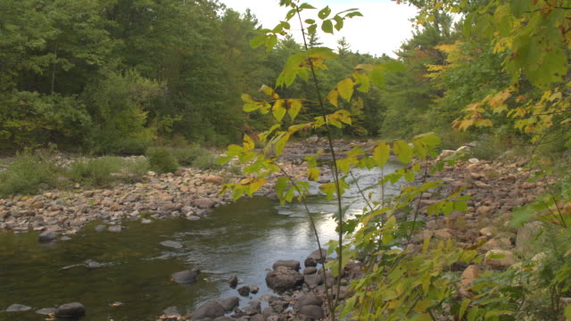 CLOSE UP Green river flowing between the rocks in riverbed through autumn forest video