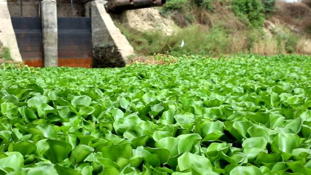 green river - haryana bildbanksvideor och videomaterial från bakom kulisserna