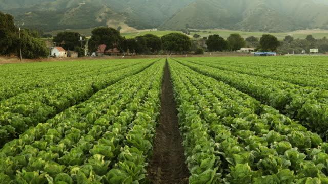 eine grüne zeile von frischen pflanzen wachsen auf einem landwirtschaftlichen betrieb feld in salinas valley, kalifornien usa - tal stock-videos und b-roll-filmmaterial