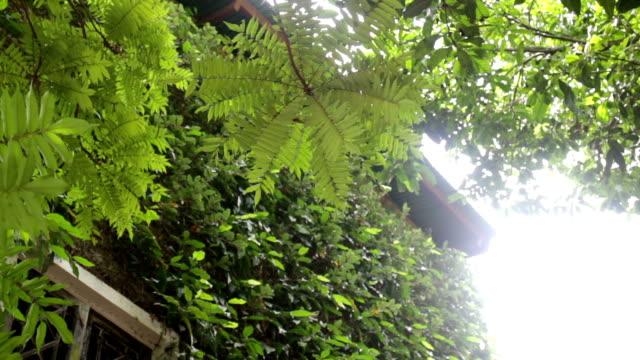 vídeos de stock e filmes b-roll de green scenery of ivy plant resort - ivy building