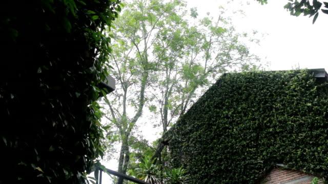 vídeos de stock e filmes b-roll de green scenery of ivy retro house - ivy building