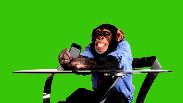 grön skärm monkey smart telefon - människoapa bildbanksvideor och videomaterial från bakom kulisserna