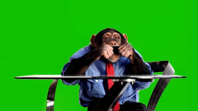 vídeos de stock, filmes e b-roll de macaco telefone inteligente com tela verde - macaco