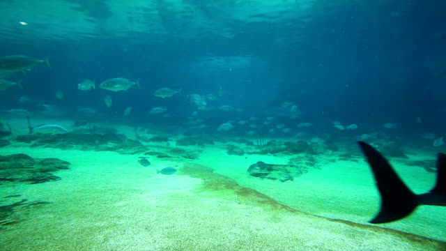 Green sea turtle in Sea World Gold Coast Queensland Australia video