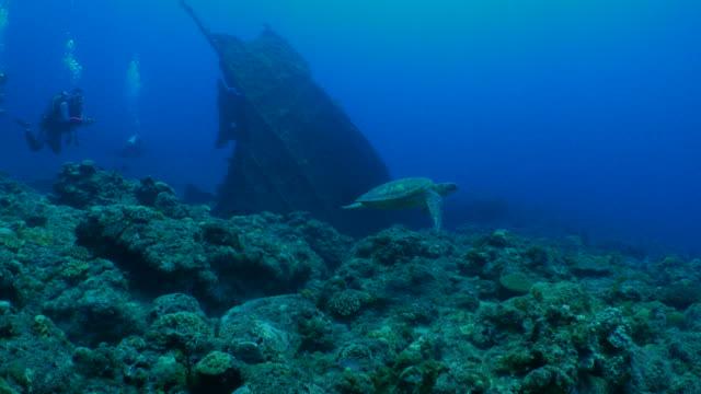 green sea turtle swimming at coral reef - кораблекрушение стоковые видео и кадры b-roll