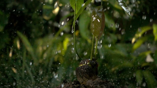 Green seedling growing on the ground in the rain video