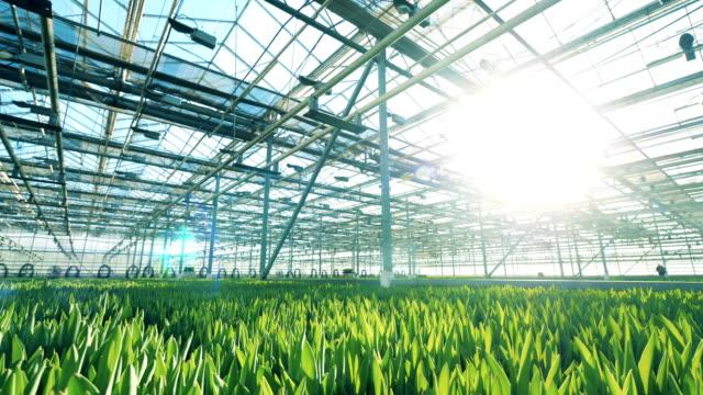 Grüne Sämlinge wachsen im sonnenbeschienenen Gewächshaus – Video