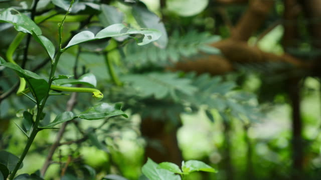 Green Snake on branch tree. video