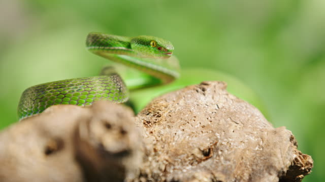 slo mo green snake snare for it's prey - gad filmów i materiałów b-roll