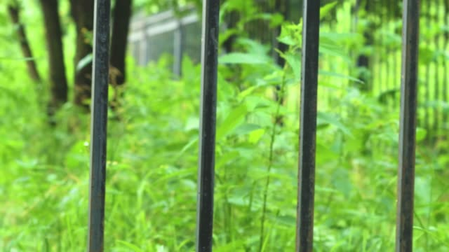 Green spaces of the park behind a metal lattice. Green spaces of the park behind a metal lattice. Closed access for outdoor recreation. wrought iron stock videos & royalty-free footage