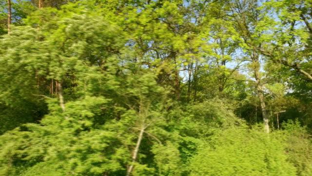 green spring forest – film