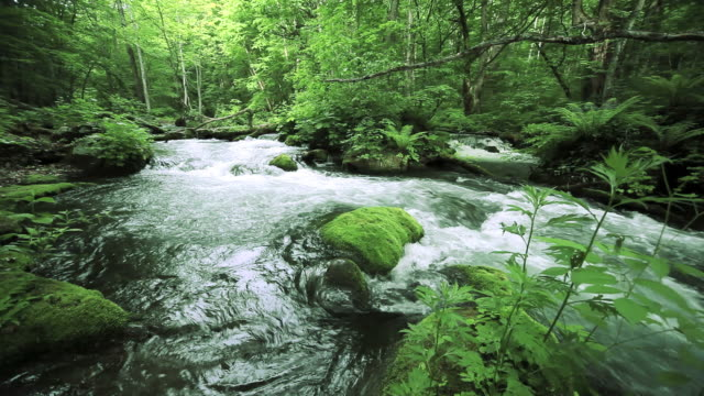 Green stream. video