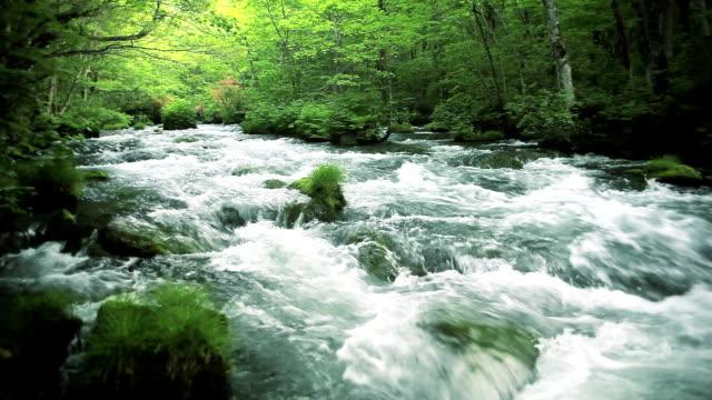 グリーンストリームます。 - 湧水点の映像素材/bロール