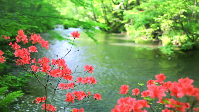 Green stream with red flowers video