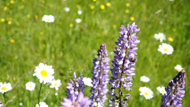 Green sunny meadow with various flowers in HD - SLOW MOTION video