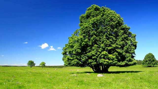 Green tree and blue sky-HD video