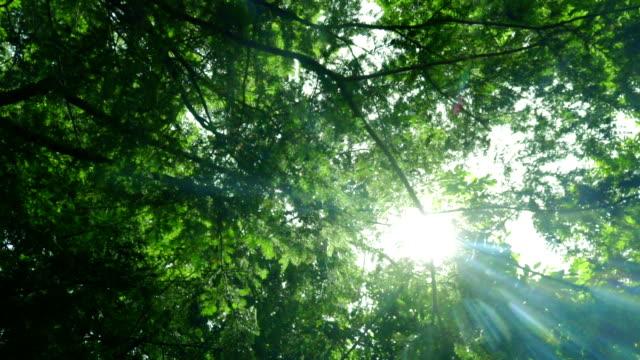 green tree bottom view. green trees with leaves and sunlight - drewno tworzywo filmów i materiałów b-roll