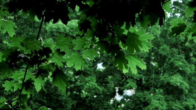 green tree branches under the falling rain video