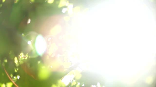 グリーンの樹木の葉 - 木漏れ日点の映像素材/bロール