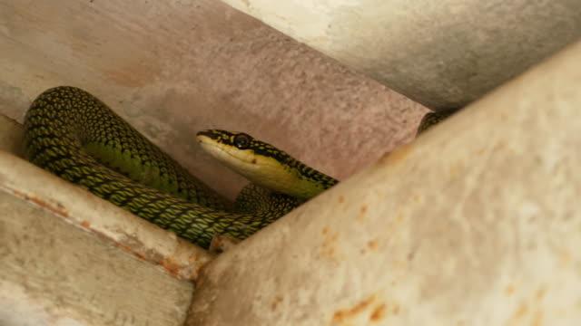 屋上に隠された緑の木のヘビ - 展示会点の映像素材/bロール