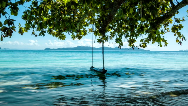 Green tree with lonely swing and sea video