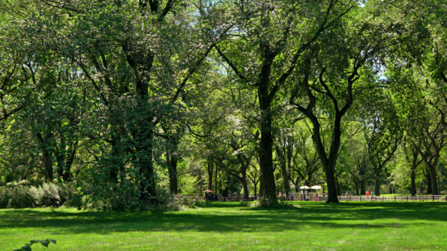 Green Trees and Grass Area in Central Park, Manhattan, US