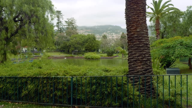 Green trees and plants in park of Funshal video