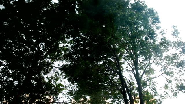 vídeos y material grabado en eventos de stock de árboles verdes doblan en la tormenta - pesado