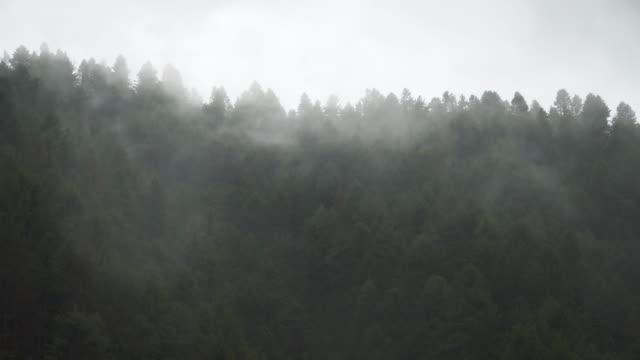 vídeos y material grabado en eventos de stock de arboles verdes en el bosque brumoso - diseño natural