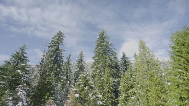 Green Trees near Mount Rainier