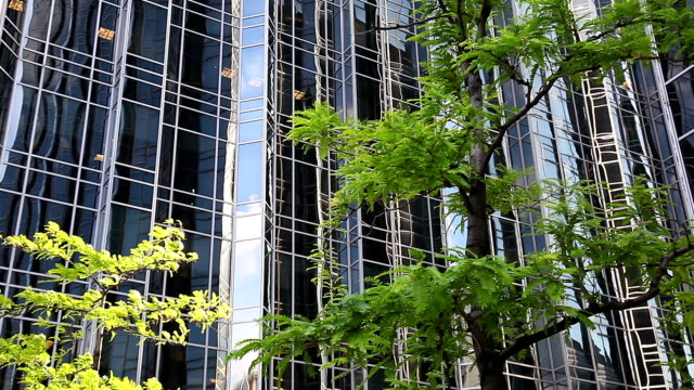 Green trees on windy day Office building background video