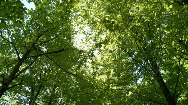vídeos de stock e filmes b-roll de hd: árvores verdes - oscilar