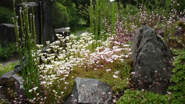 zielona tress w drezdeńskiej ogrodzie botanicznym, ścieżka w ogrodzie - lilia filmów i materiałów b-roll