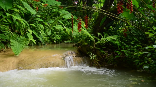 green tropical flora with stream of water, laos - cespuglio tropicale video stock e b–roll